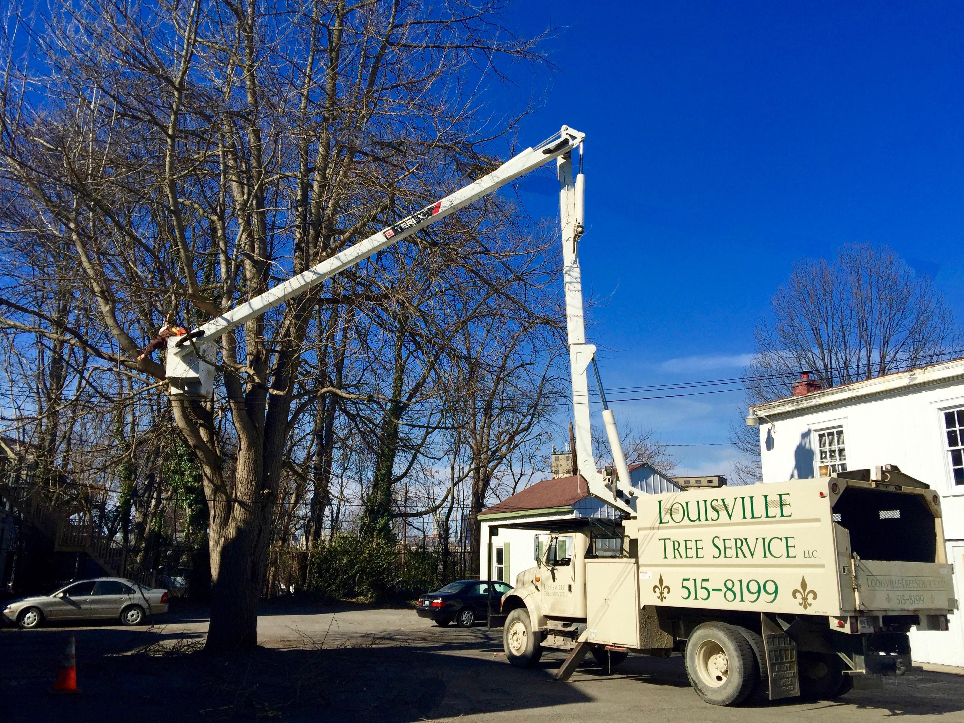 Louisville Tree Removal