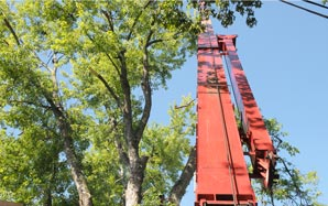 Tree Service in Louisville