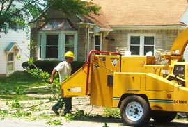 Tree Care in Louisville
