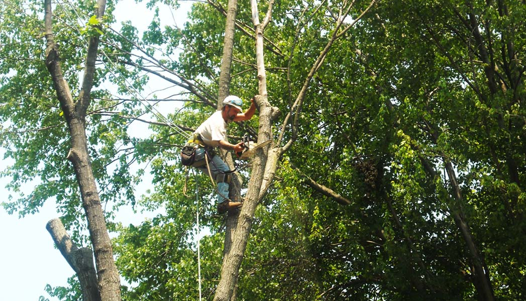 Louisville Tree Arborists