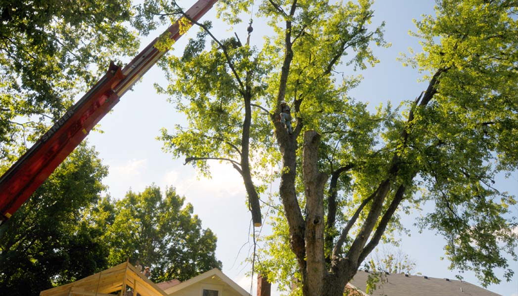 Louisville Tree Maintenance