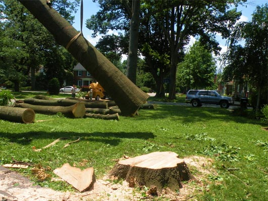 Louisville Tree Cutting Service